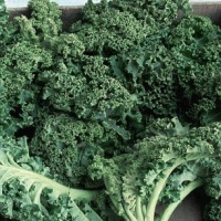 Kale: The toxic truth! How our obsession with the leafy greens could lead to bloated bellies, thyroid problems and even KIDNEY STONES | Daily Mail Online