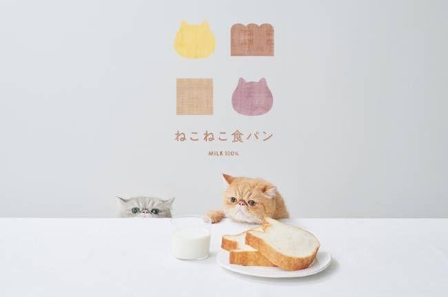 ねこねこ食パンに「キャラメルナッツ」フレーバー登場!オンラインにて9月限定で買えるの画像