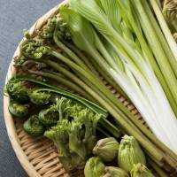 うど、わらび、たらの芽、ふきのとう…春の山菜8種の下処理ガイド