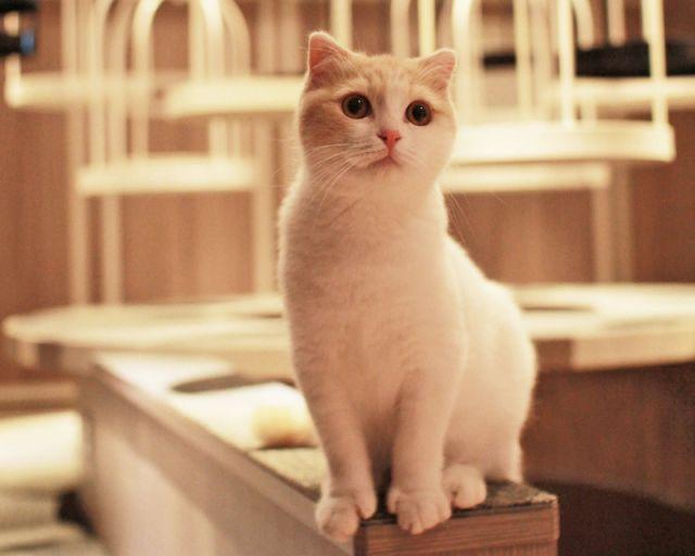 猫と遊ぶときのお約束