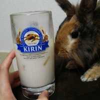 ウイスキーの牛乳割りは初心者でもおいしいオススメのお酒!