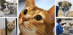 猫好き専用のベトナム風フォー!その名も「ニャー」が、『フェリシモ猫部™』から新登場の画像